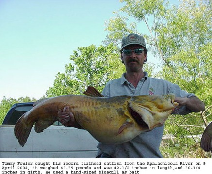 Record info flathead catfish record sciox Image collections